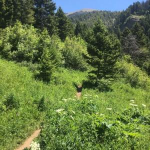 Middle Cottonwood Creek Trail