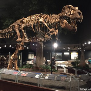 museum-of-the-rockies-0510