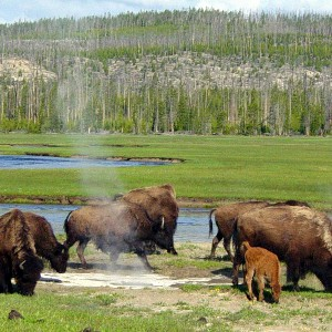 yellowstone-national-park-02